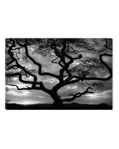Tablou Alb-Negru Abstract Startonight, Apus in spatele copacului, luminos in intuneric, 60 x 90 cm