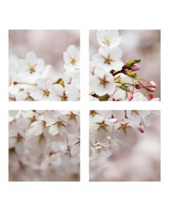 Tablou canvas 4 piese - Floare de cirese - 4Decor